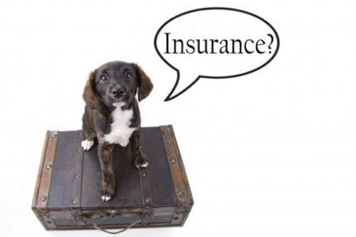 insurance-dog